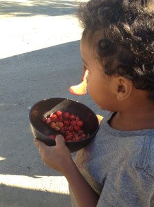 While strawberries found by the roadside!